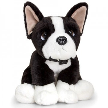 Catel de plus Boston Terrier 35 cm