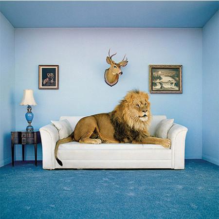 Puzzle cu ramă The Lion Clementoni 250 piese