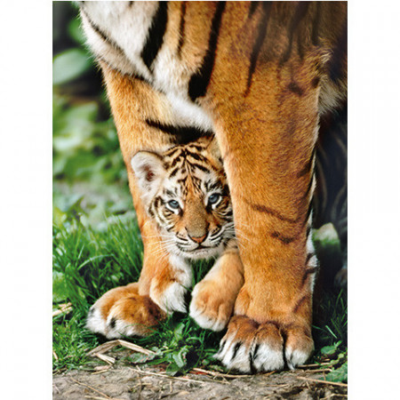 Puzzle HQC Bengal Tiger 500 piese