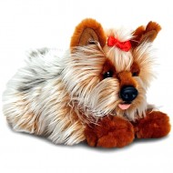 Catel de plus Yorkshire Terrier 35 cm