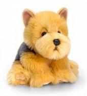 Catel de plus Cairn Terrier 35 cm