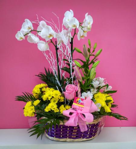 Cesta Mixta de planta Phalenopsis y flor cortada