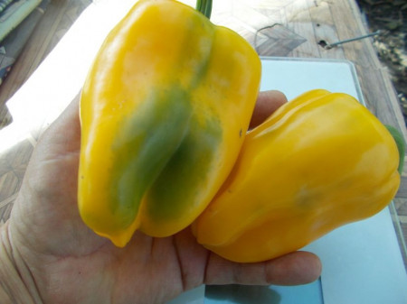 SEMINTE ARDEI - A 19 AMARELLO SWEET PEPPER YELLOW GIANT