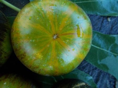 SEMINTE ROSII - T 353 XANADU GREEN GODDESS