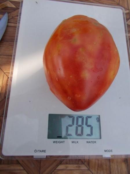 SEMINTE ROSII - T 435 DINNER PLATE