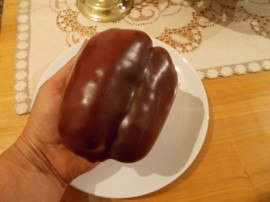 SEMINTE ARDEI MARON - A. 08 CHOCOLATE BEAUTY