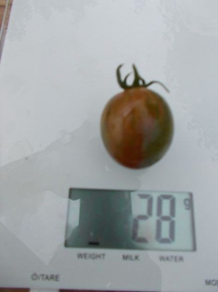 SEMINTE ROSII - T 456 GREEN BUMBLE BEE