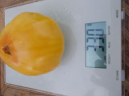 SEMINTE ROSII - T 498 HUGE LEMON OXHEART