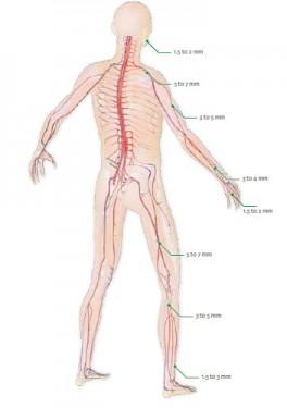 NeuraGen, Tub din colagen pentru ghidare si crestere nervoasa