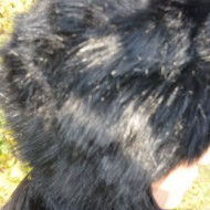 Caciula de iarna din blanita moale, neagra, si interior captusit