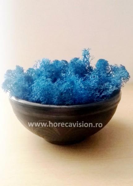 Decorațiune din licheni albaștri, stabilizați, de calitate superioară