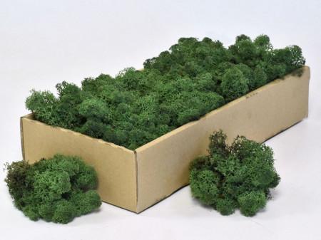 Licheni verde-închis