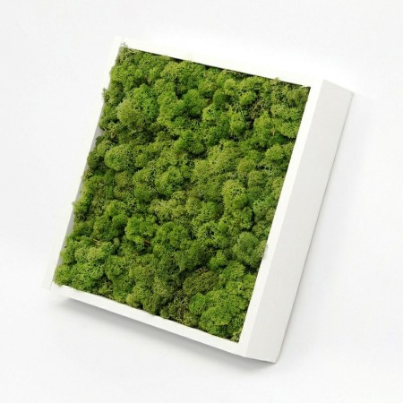 Tablou vegetal din licheni naturali, stabilizați, de calitate superioară - 30 cm x 30 cm