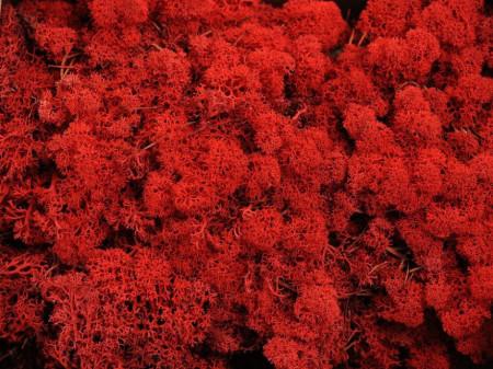 Licheni roșii