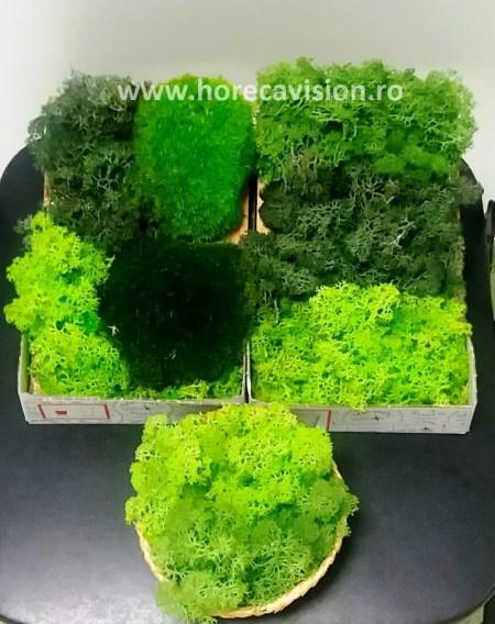 Decorațiune 1 din licheni verzi, 2 culori, stabilizați, de calitate superioară.