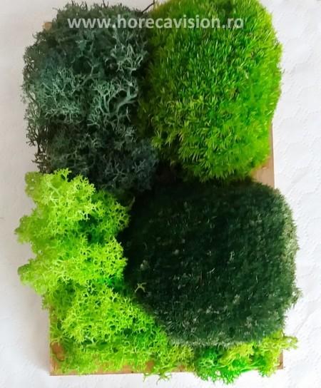 Mini tablou 1 din mușchi bombați - 2 culori și licheni verzi - 2 culori, stabilizați, de calitate superioară.- 24 cm x 18 cm