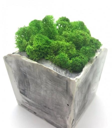 Licheni verde-pădure