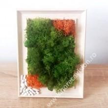 Mini tablou 2 din licheni naturali, stabilizați, 2 culori, de calitate superioară - 15 cm x 10 cm