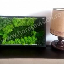 Tablou vegetal 3 din mușchi și licheni naturali, stabilizați, de calitate superioară - 42 cm x 24 cm