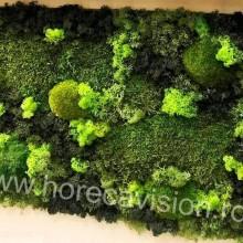 Tablou vegetal 5 din mușchi și licheni naturali, stabilizați, de calitate superioară - 60 cm x 40 cm