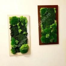 Set 2 - 2 tablouri vegetale din mușchi și licheni naturali, stabilizați, de calitate superioară - 55cm x 25cm