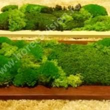 Tablou vegetal 1 din mușchi și licheni naturali, stabilizați, de calitate superioară - 55 cm x 25 cm