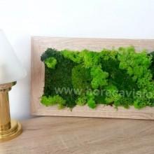 Tablou vegetal 4 din mușchi și licheni naturali, stabilizați, de calitate superioară - 42 cm x 24 cm