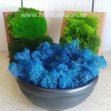 Set 3 decorațiuni vegetale naturale din mușchi și licheni de calitate superioară
