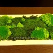 Tablou vegetal 2 din mușchi și licheni naturali, stabilizați, de calitate superioară - 55 cm x 25 cm