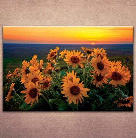 Slika na platnu Suncokreti 3022_P