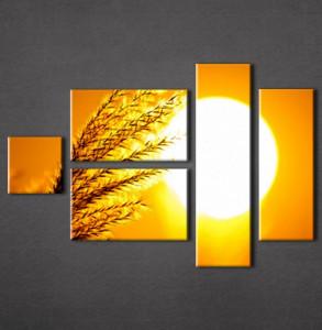 Slika na platnu Klas žita Nina3011_5