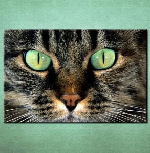 Slika na platnu Mačka Nina3045_P
