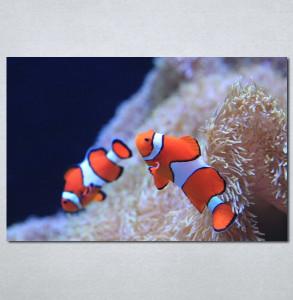 Slika na platnu Riba nemo Nina3081_P