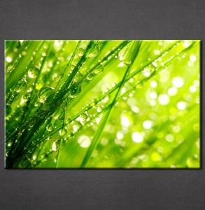 Slika na platnu Zelena trava Nina3051_P