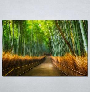 Slike na platnu Bambus Nina215_P