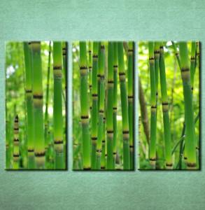 Slike na platnu Bambus Nina3093_3