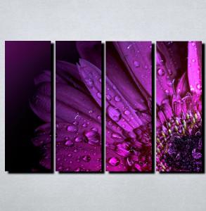 Slike na platnu Kapi rose i cvet Nina122_4