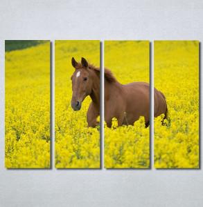 Slike na platnu Konj na žutoj poljani Nina30264_4