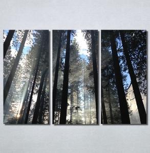 Slike na platnu Mračna šuma Nina30195_3