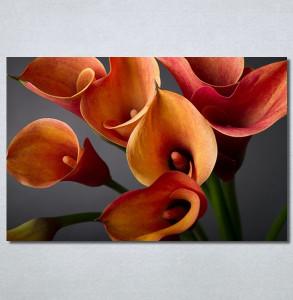 Slike na platnu Narandžaste Kale Nina30216_P