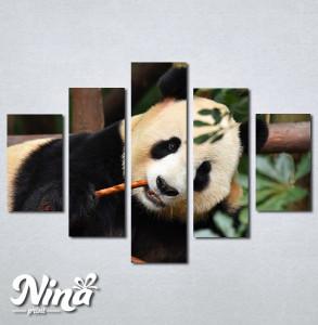 Slike na platnu Panda Nina268_5