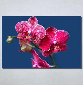 Slike na platnu Pink Orhideja Nina30290_P