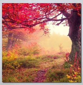 Slike na platnu Prelepa jesen u šumi Nina30244