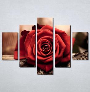 Slike na platnu Ruža Nina058_5