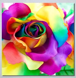 Slike na platnu Šarena ruža Nina30288