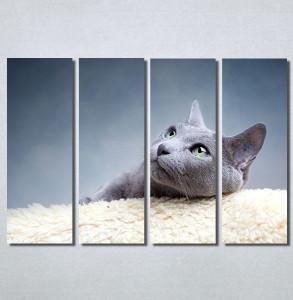 Slike na platnu Siva mačka Nina30148_4