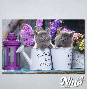 Slike na platnu Sive mačke Nina311_P
