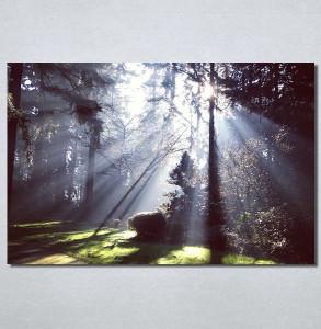 Slike na platnu Svetlost u šumi Nina30180_P