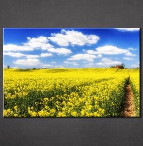 Slike na platnu Žuta poljana Nina3086_P