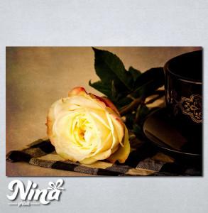 Slike na platnu Žuta ruža Nina242_P